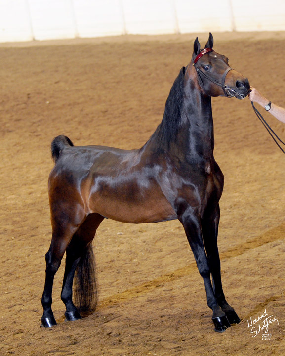15-LedyardsEduardo-GC009-061